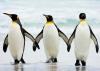 penguins holding hands.png